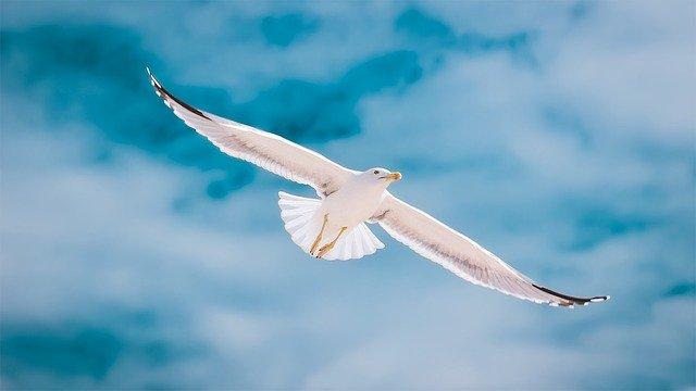Photo d'une mouette qui vole et symbolise la liberté.